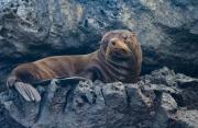 Seal On a Ledge