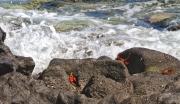 Foam,_Rocks_and_Crabs